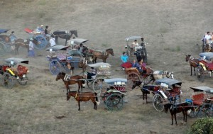 Paard-achtigen in Bagan